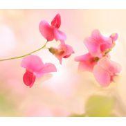 Рисунок Розовое чудо размером 1*0,6м